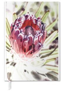 Wild Protea