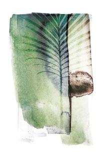 Jurassic Cycad