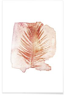 Pressed Cycas