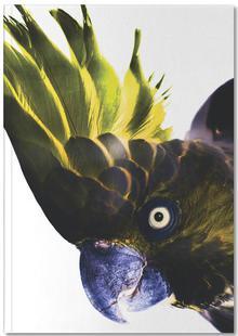 Birds of Paradise 08b