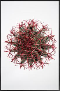 Botanical Obsession 17