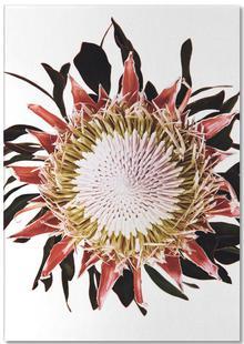 Classic Botanical Flowers 09