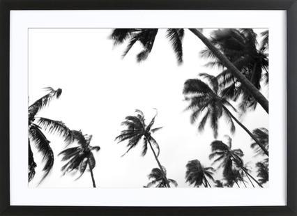 Pemba Palms