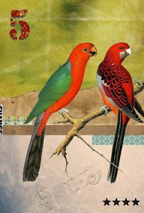 Animals: Birds
