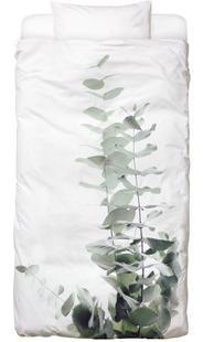Eucalyptus White 2