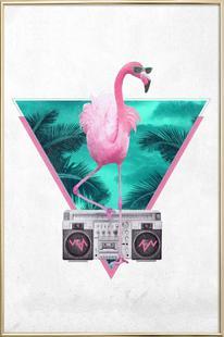 Miami Flamingo