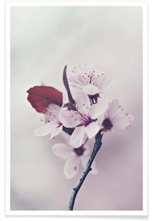 Hanami Cherryflower