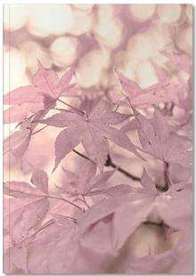 Rose Maple Leaves