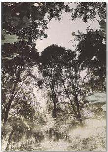 Tiergarten 1