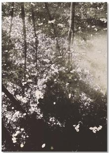Tiergarten 4