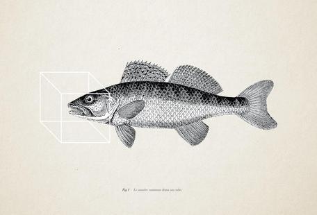 Fish#1