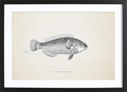 Fish#2