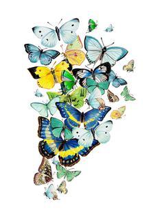 Schmetterlinge Blaugrün