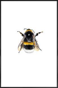 Bumblebee 01