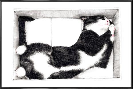 Katze im Karton