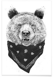 Wild Bear