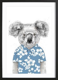 Summer Koala Blue