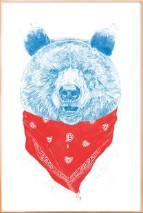 Wild Bear Color