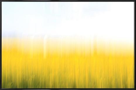 Fields Of Gold 99