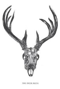 The Deer Skull
