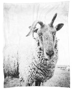 Sheep II