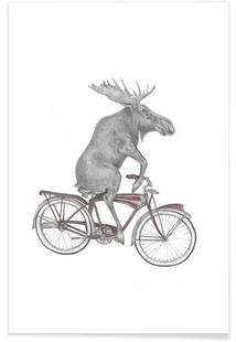 Murray Maynooth Moose