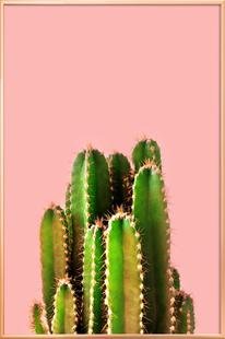 Cactus Time