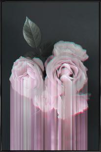 Fall in Rose