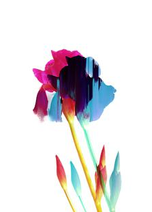 Glitched Iris