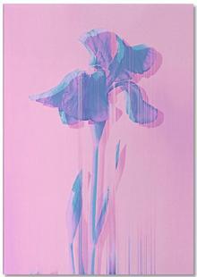 Glitcherd Iris on Pink