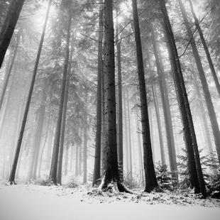 Nur Die Wälder Wissen Warum
