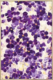 Violet Bloom