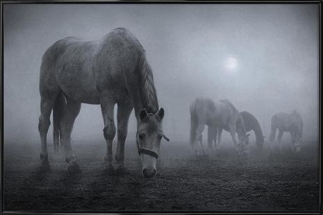 Moonlit - Samuel Málach