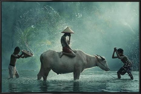Water Buffalo - Vichaya