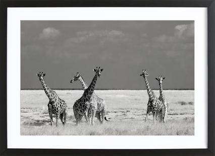 Look Girls, There Is Strange Animals - Mathilde Guillemot
