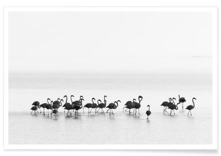 Flamingos - Joan Gil Raga