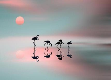 Family flamingos - Natalia Baras