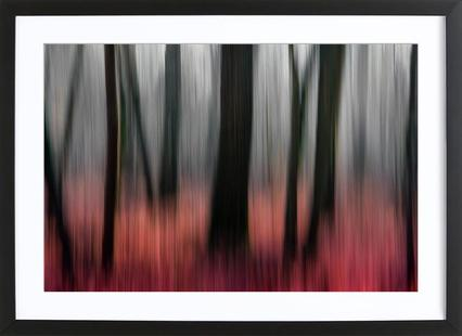 Red Wood - Gilbert Claes