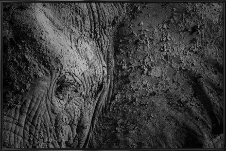 Natural Texture - Ibrahim Canakci