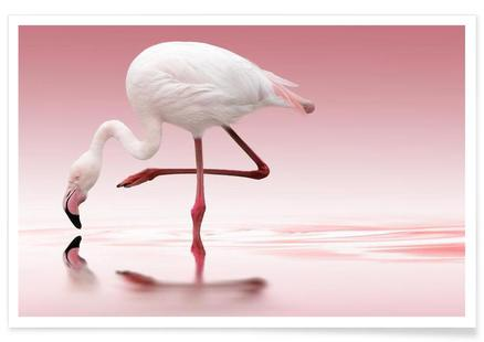 Flamingo Doris Reindl