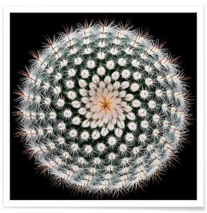 Notocactus Scopa - Victor Mozqueda