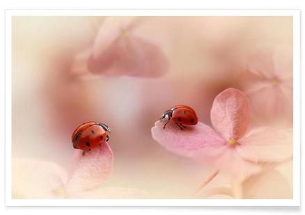 Ladybirds On Pink Hydrangea - Ellen Van Deelen