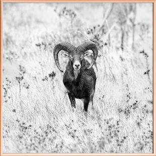 Horns - Nicolàs Merino