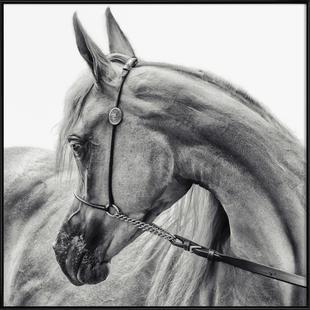 The Arabian Horse - Piet Flour