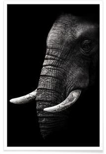 Portrait - Wild Photo Art