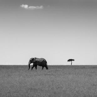 Elephant And The Friendly Cloud - Ali Khatatw