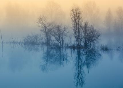 Enchanted Serenity - Meizner