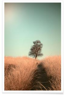 Grass and Path - Jaap Van den
