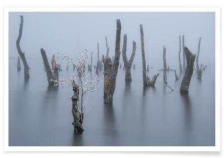 Frozen and Foggy World - Piet Haaksma