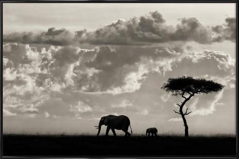 Silhouettes of Mara - Mario Moreno